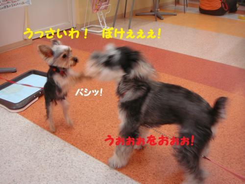 DSC04542(1)_convert_20111126233324.jpg