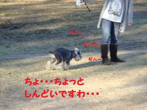 DSC04692(1)_convert_20111129223313.jpg