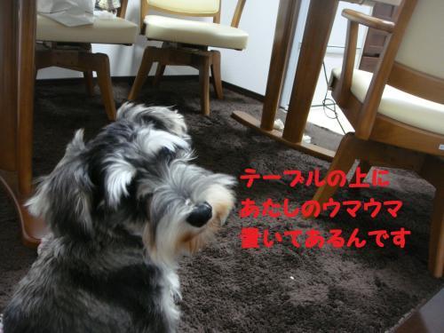 DSC04746(1)_convert_20111127224133.jpg