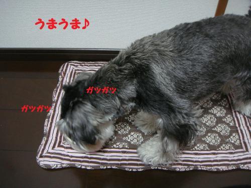 DSC04760(1)_convert_20111127224711.jpg