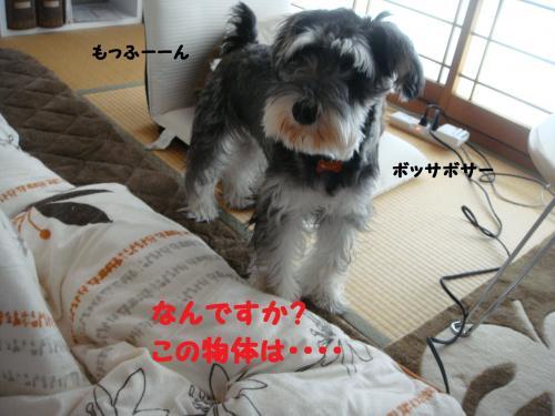 DSC04763@_convert_20111130220735.jpg