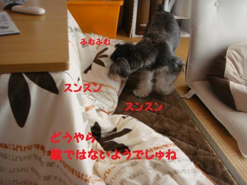 DSC04765@_convert_20111130220824.jpg