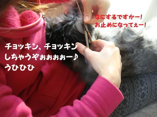 DSC04789_convert_20111201221722.jpg