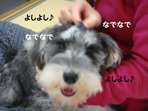 DSC04806@_convert_20111201221246.jpg