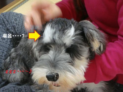 DSC04807@_convert_20111201221356.jpg