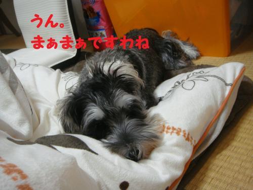 DSC04811@_convert_20111130220926.jpg