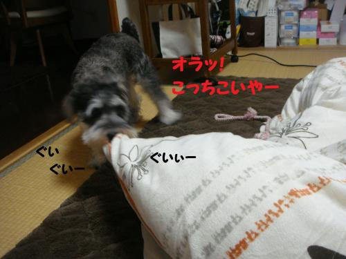 DSC04837@_convert_20111205225846.jpg