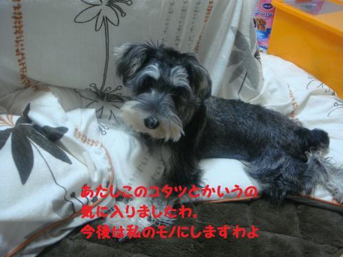 DSC04859@_convert_20111205225720.jpg