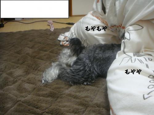 DSC04867@_convert_20111205230354.jpg