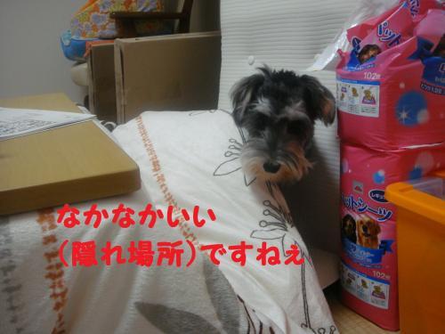 DSC04907@_convert_20111205231227.jpg