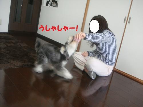 DSC04925@_convert_20111204220157.jpg