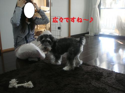 DSC04947@_convert_20111204220357.jpg