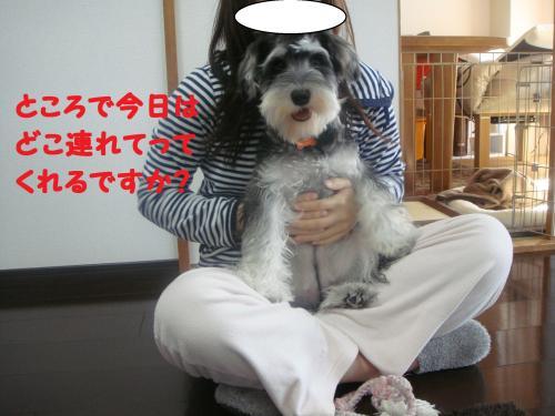 DSC04976@_convert_20111204222334.jpg