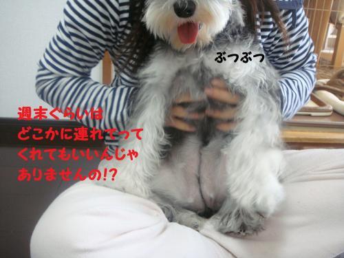 DSC04982@_convert_20111204222731.jpg