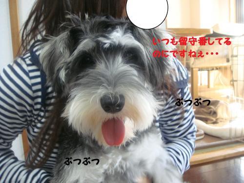 DSC04985@_convert_20111204222653.jpg