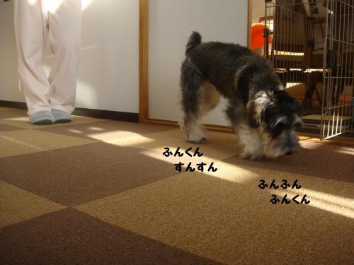 DSC05005@_convert_20111204224512.jpg