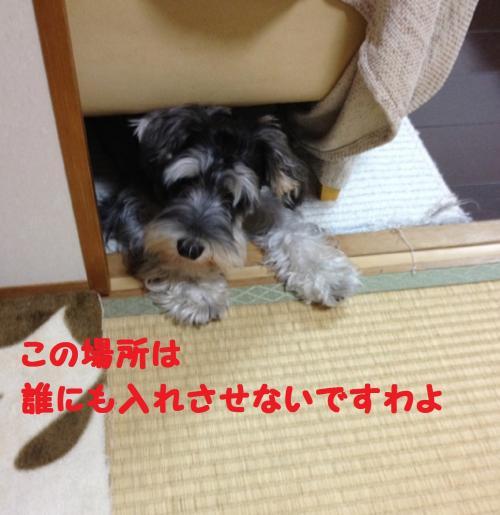 IMG_1523@_convert_20111203110750.jpg