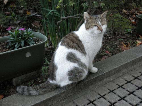 江ノ島の猫2