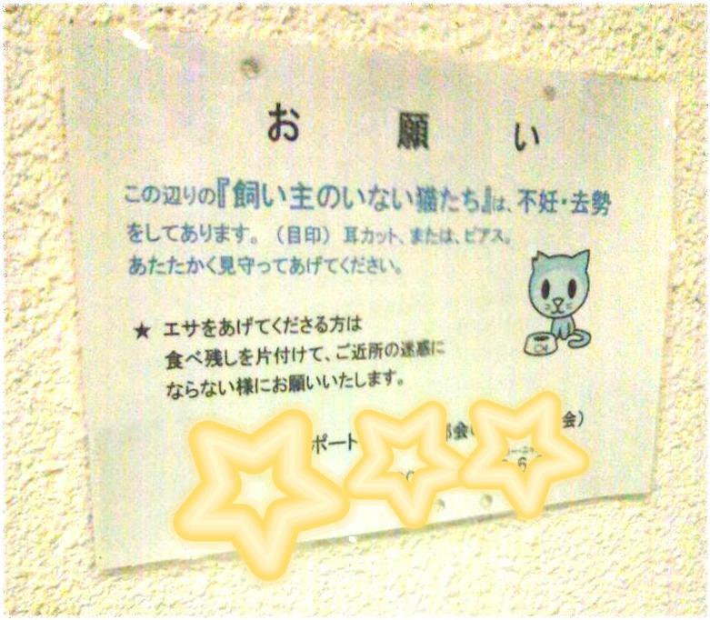 野良猫サインボード