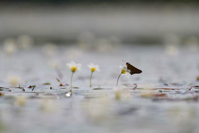 ガガブタの池8