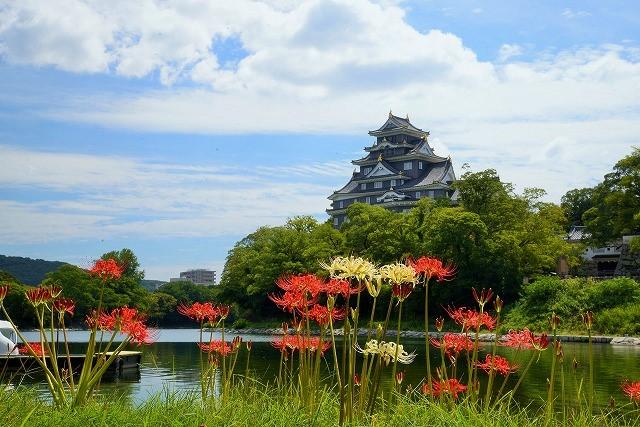 お城を背景にに紅白の彼岸花1