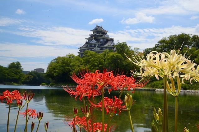 お城を背景にに紅白の彼岸花2