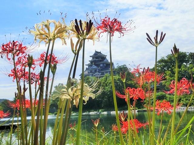 お城を背景にに紅白の彼岸花11