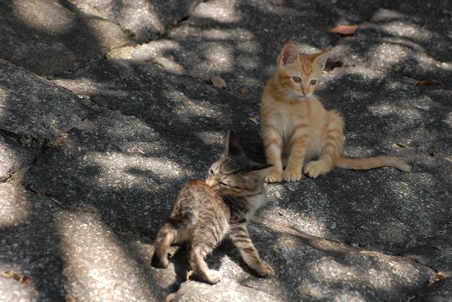 彼岸花の近くでじゃれあう子猫1