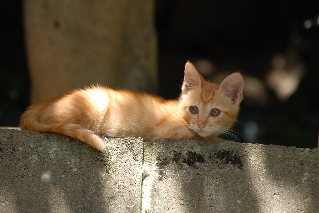 目を覚ました子猫1