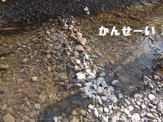 DSCF6175.jpg