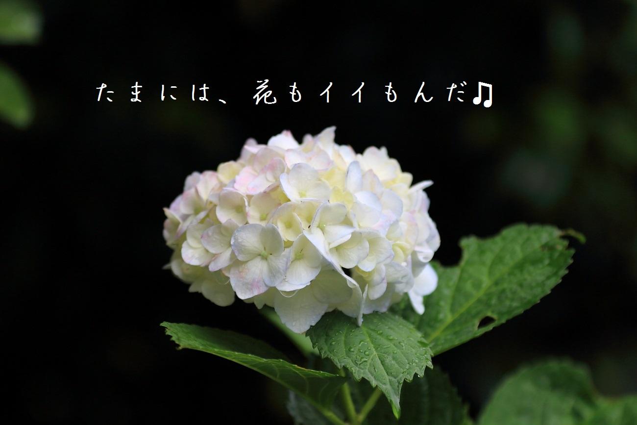 10_20130618194448.jpg
