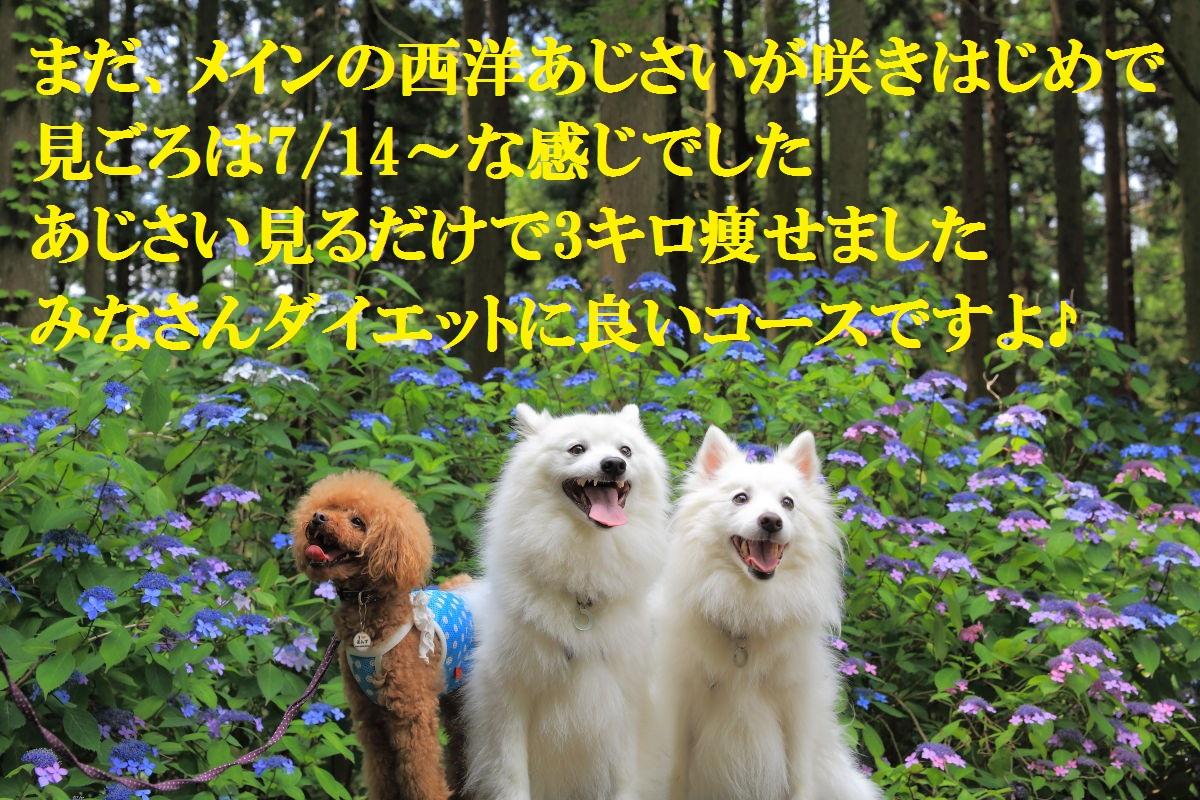 14_20130715125655.jpg