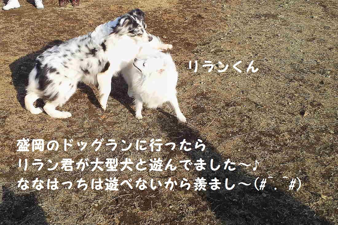 1_20130325202946.jpg