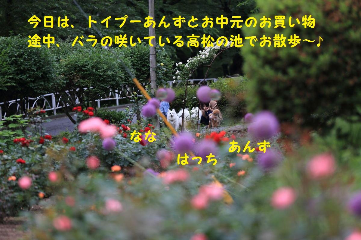 1_20130630074851.jpg