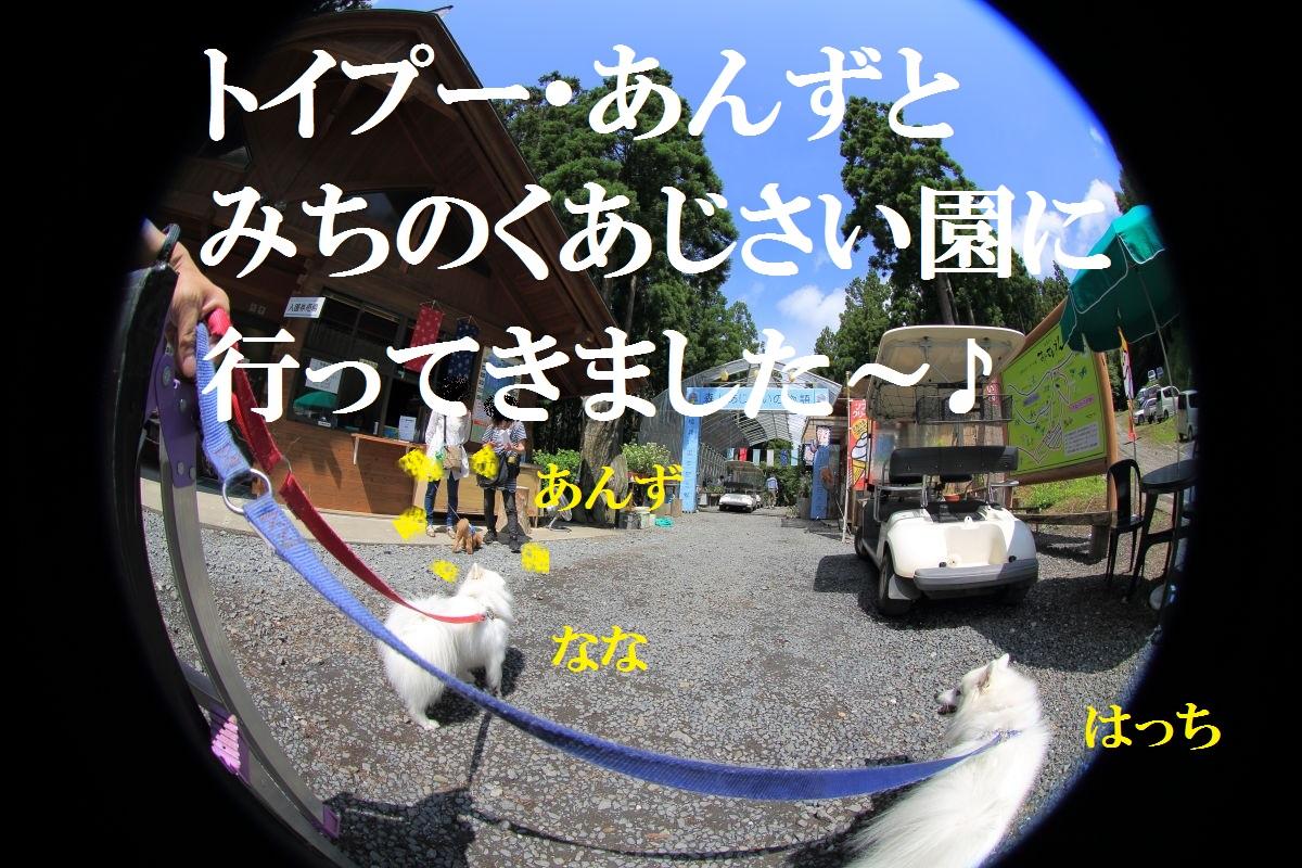 1_20130715125033.jpg
