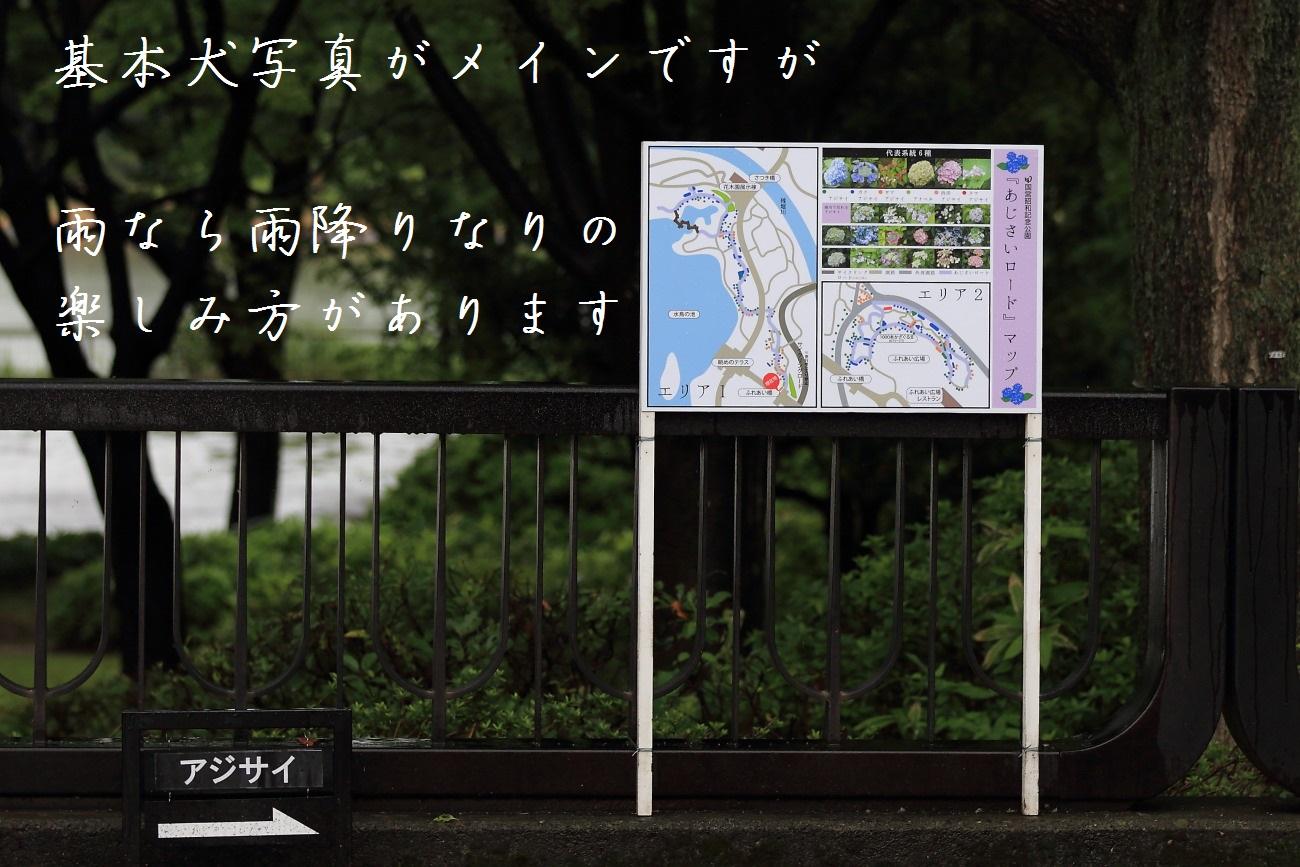 2_20130618194304.jpg