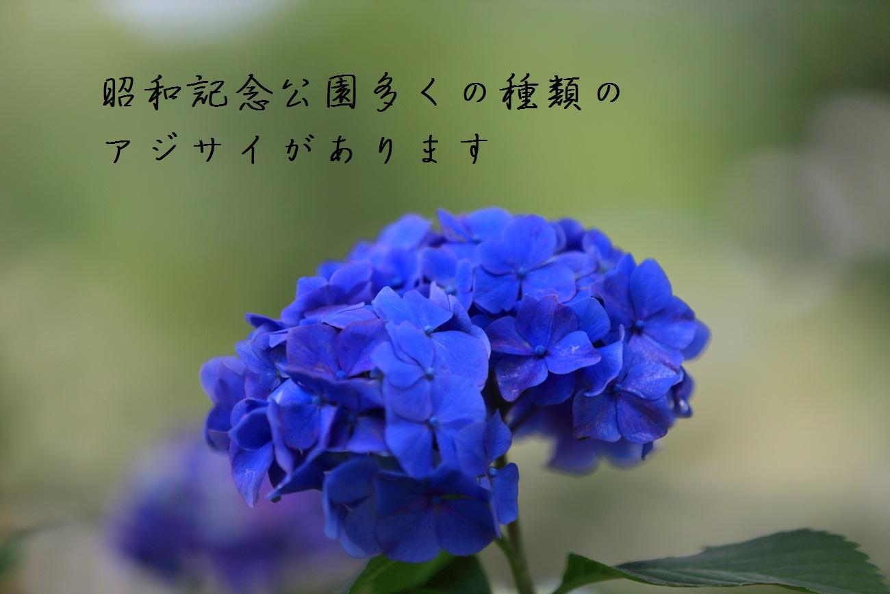 3_20130618194452.jpg
