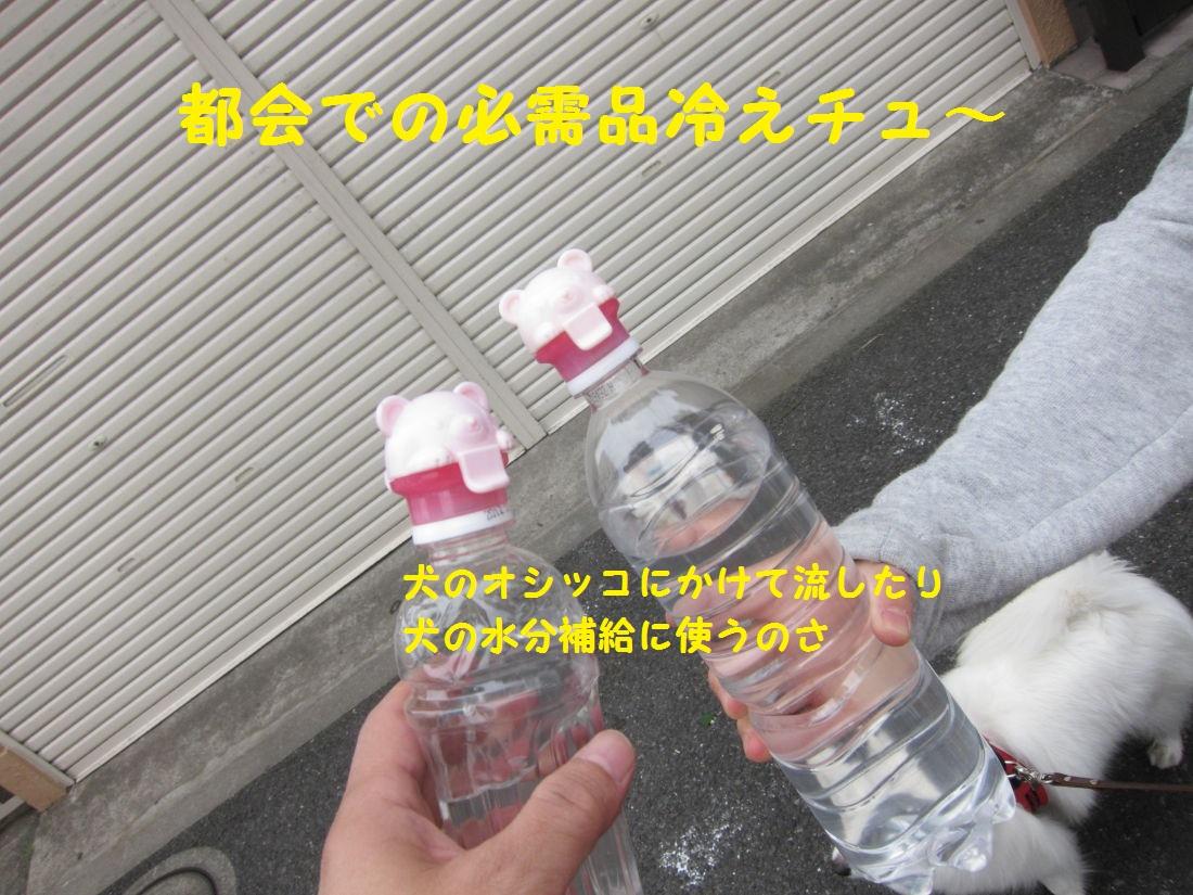 4_20130507070922.jpg