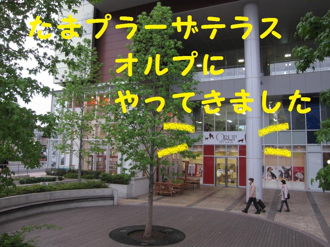 4_20130508182835.jpg