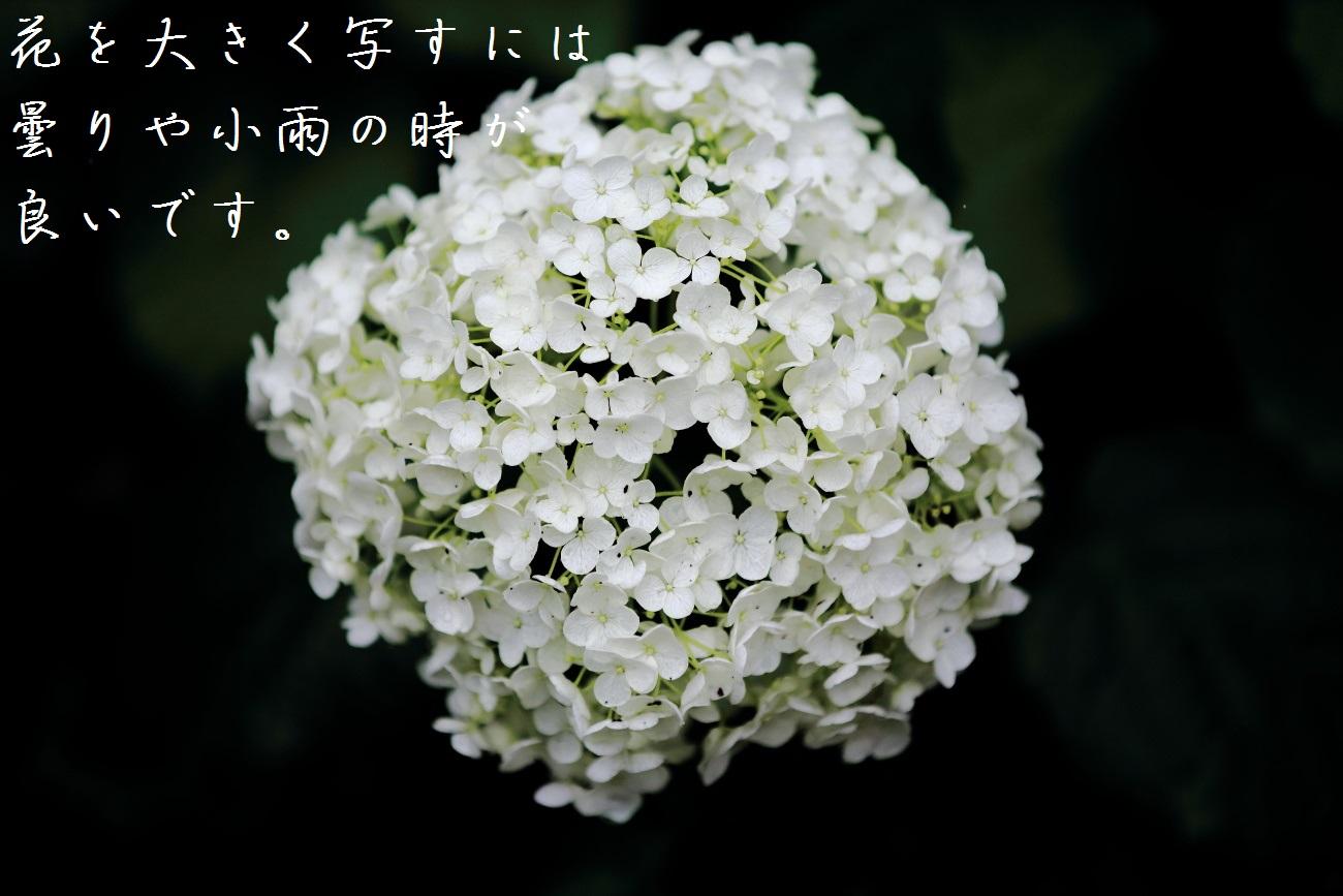 4_20130618194303.jpg
