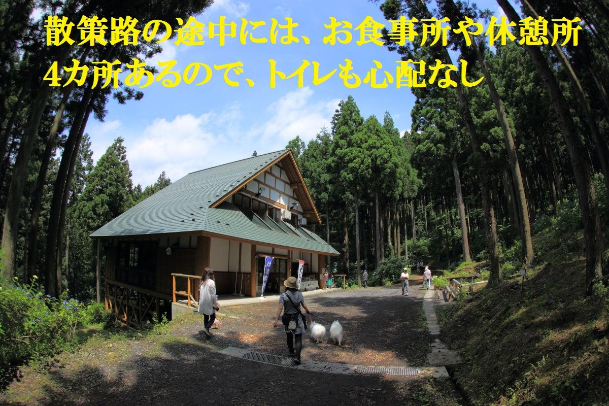 4_20130715125033.jpg