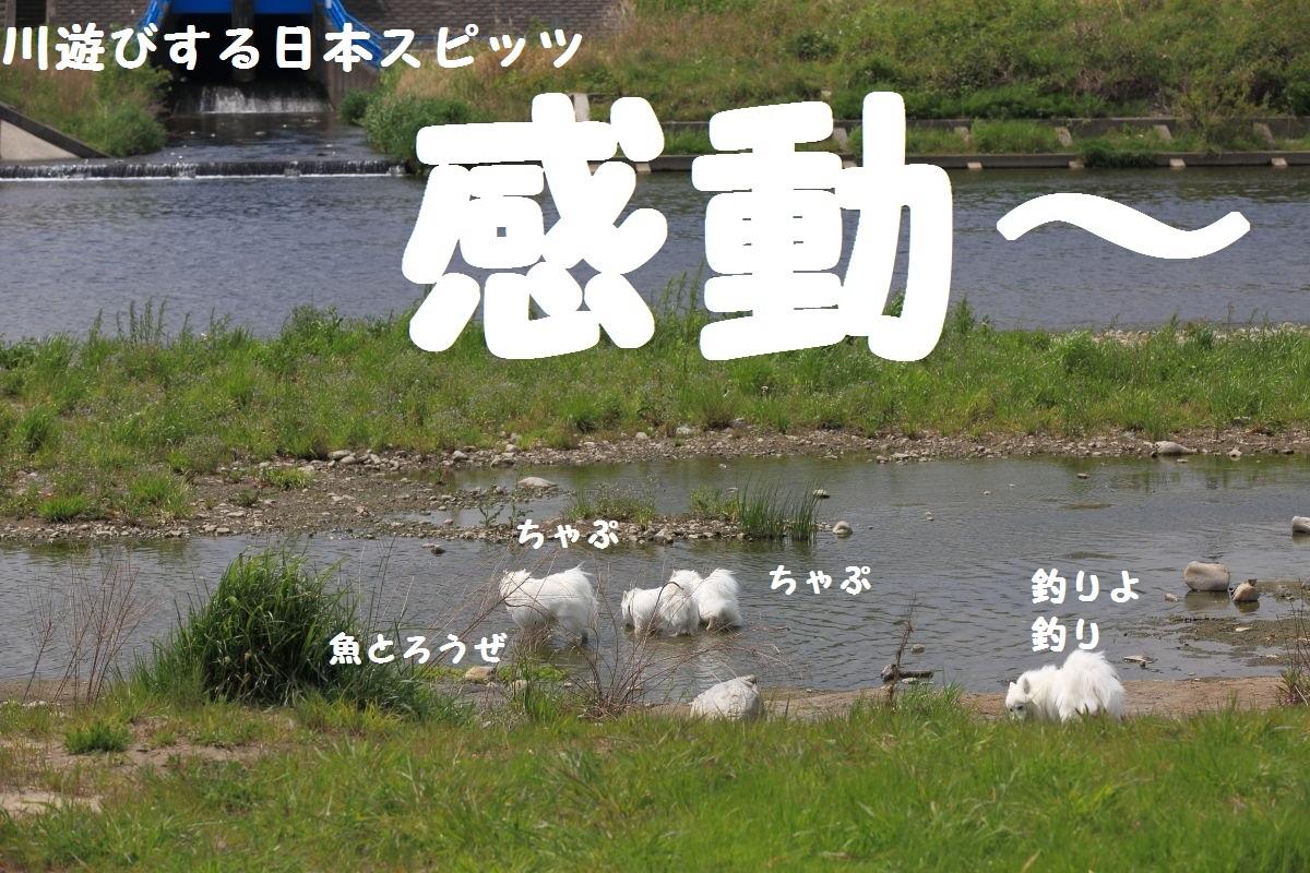 5_20130519204154.jpg