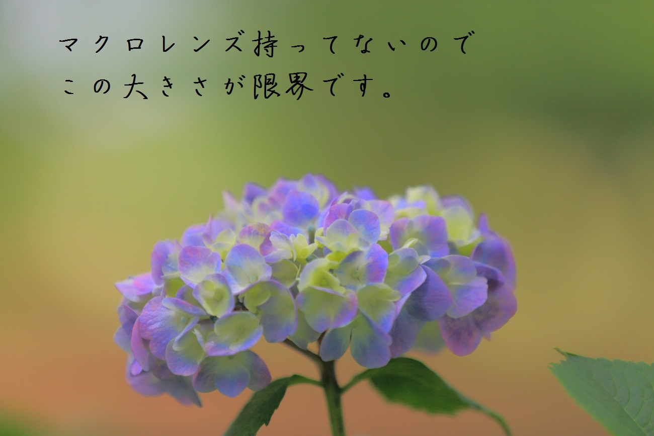 5_20130618194302.jpg