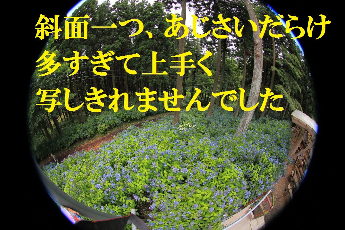 5_20130715125032.jpg