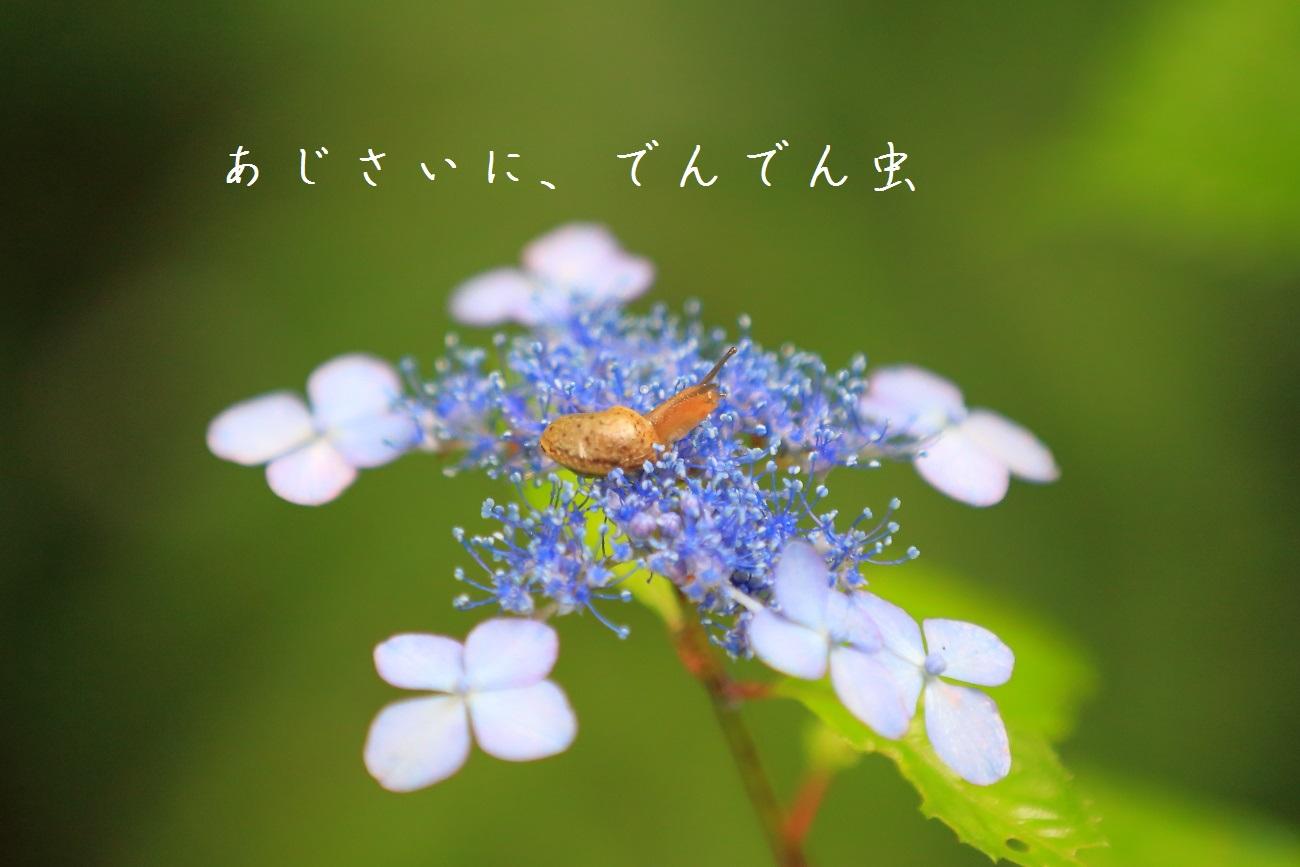 7_20130618194451.jpg