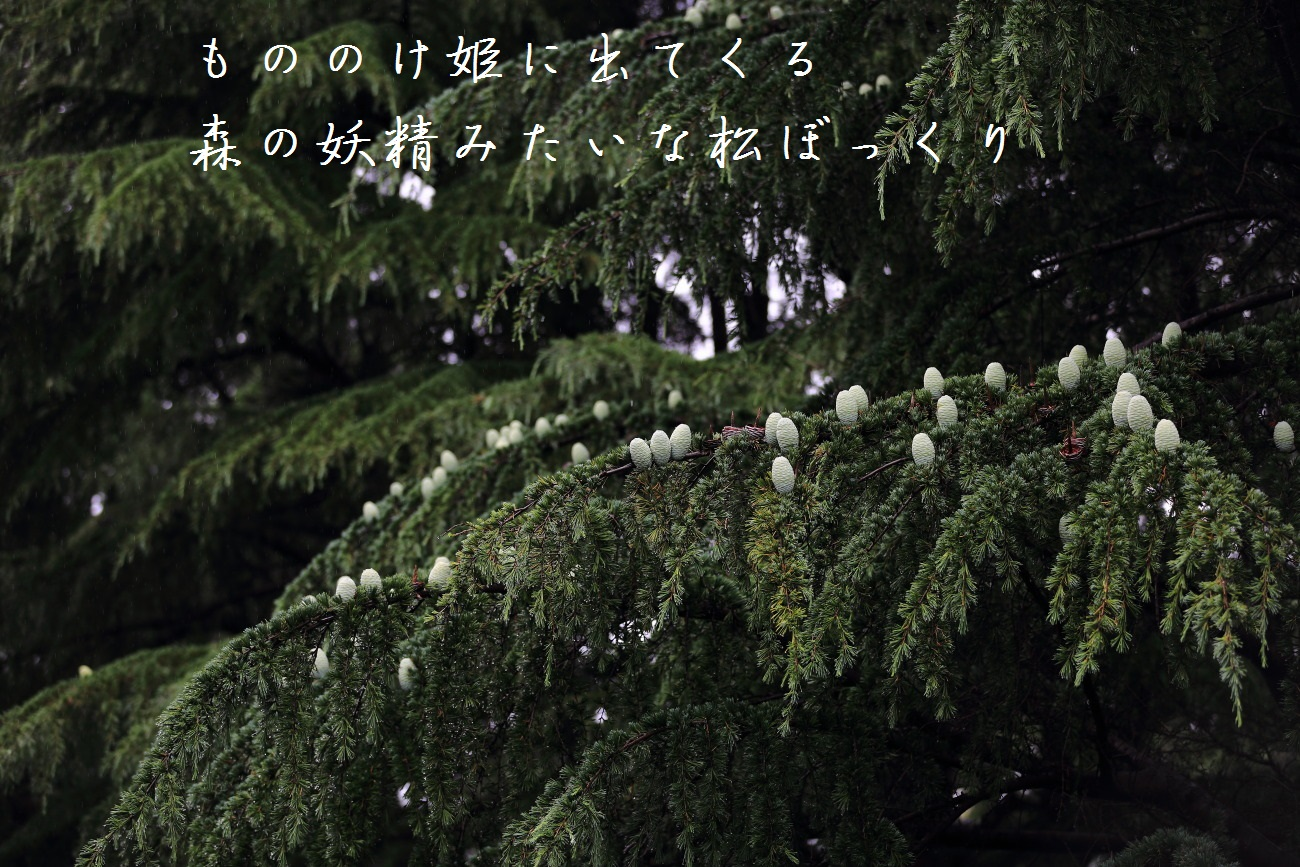 8_20130618194450.jpg