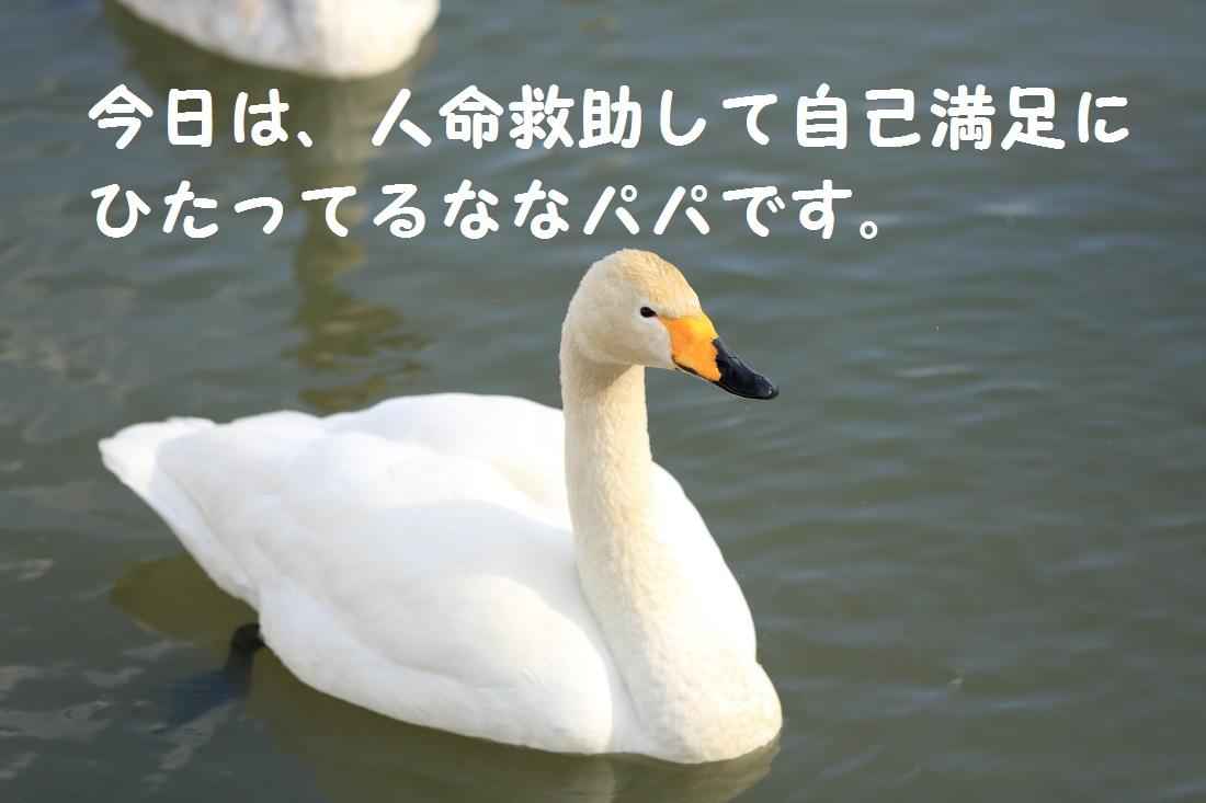DPP_0530.jpg