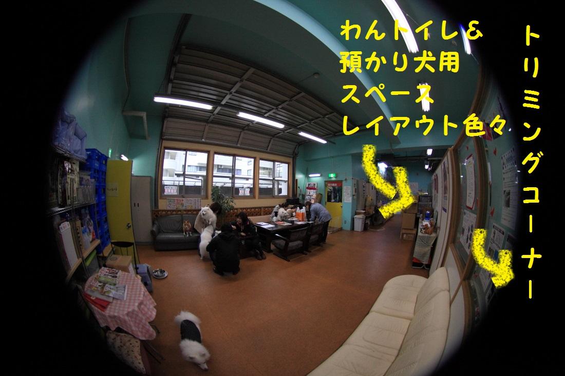 DPP_0685.jpg