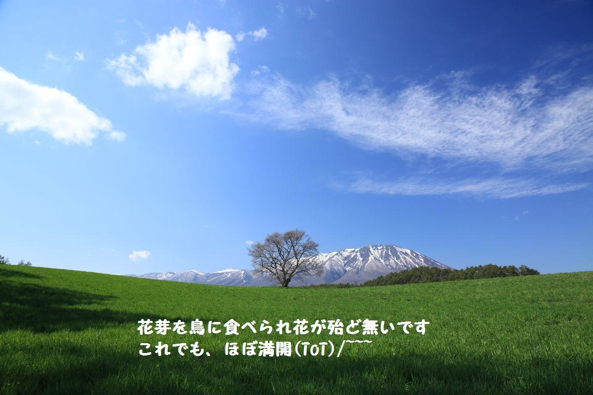 DPP_2128.jpg