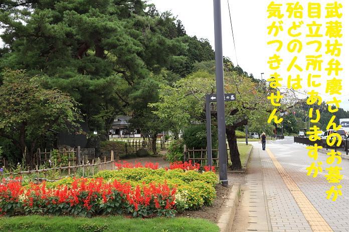 IMG_25072010.jpg